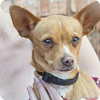 Adopt A Pet :: Millie - San Marcos, CA