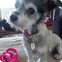 Adopt A Pet :: Sophia - Honeoye Falls, NY