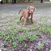 Adopt A Pet :: Eddie - Weeki Wachee, FL