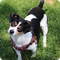 Adopt A Pet :: Little Mama - Denver, CO