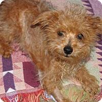 Adopt A Pet :: 'SPIKE' - Agoura Hills, CA
