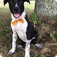 Adopt A Pet :: Duke - Ashville, OH