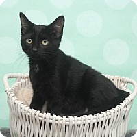 Adopt A Pet :: Sasarella - Chippewa Falls, WI