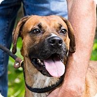 Adopt A Pet :: Roxie - Clarkesville, GA
