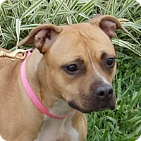 Pit Bull Terrier Mix Dog for adoption in Monroe, Michigan - Ali