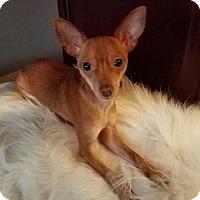 Adopt A Pet :: Malibu - Sheridan, IL