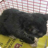 Adopt A Pet :: A412701 - San Antonio, TX