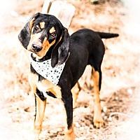 Adopt A Pet :: Dooley - Phoenix, AZ