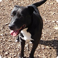Adopt A Pet :: Austin - House Springs, MO