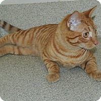 Adopt A Pet :: Sherlock - Windsor, VA