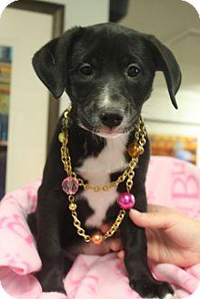 Labrador Retriever Mix Puppy for adoption in Marietta, Georgia - Jade