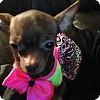 Adopt A Pet :: Precious - Seattle, WA