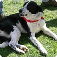 Adopt A Pet :: Ellie Mae - Mesa, AZ