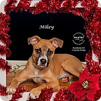 Adopt A Pet :: Mikey - Westfield, NY