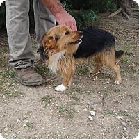 Adopt A Pet :: Benji - Andover, KS