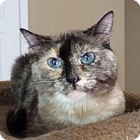 Adopt A Pet :: Savannah - Harrisburg, NC
