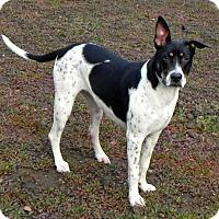 Adopt A Pet :: Bailey - Fresno, CA
