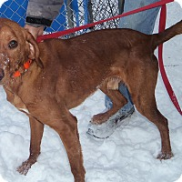 Adopt A Pet :: COPPER - Medford, WI
