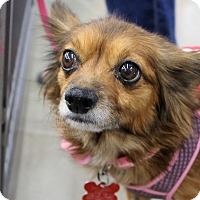 Adopt A Pet :: Rosie - Oakley, CA