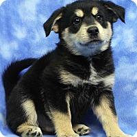 Adopt A Pet :: FELIPE - Westminster, CO