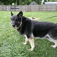 Adopt A Pet :: Wesley - Pataskala, OH
