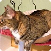 Adopt A Pet :: Chloe - Bridgeton, MO