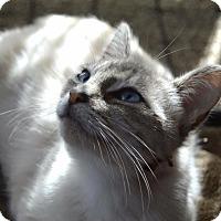 Adopt A Pet :: Suki - Rochester Hills, MI