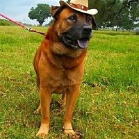 Bullmastiff Mix Dog for adoption in Simsbury, Connecticut - Nero