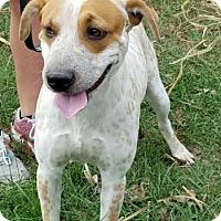 Adopt A Pet :: Ryker - Cat Spring, TX
