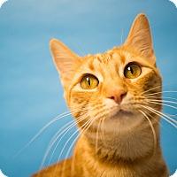 Adopt A Pet :: Tangerine - Houston, TX