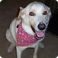 Adopt A Pet :: Maddie - Coldwater, MI