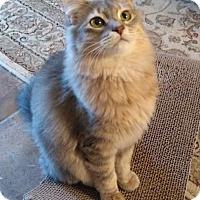 Adopt A Pet :: Reina - Glendale, AZ