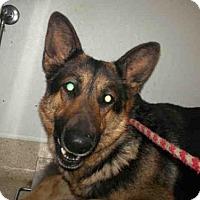 Adopt A Pet :: BELLA - Bakersfield, CA