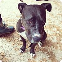 Adopt A Pet :: Hallie - Atlanta, GA