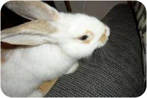 Other/Unknown Mix for adoption in Maple Shade, New Jersey - Twister