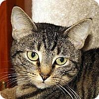 Adopt A Pet :: Missy - Ventura, CA