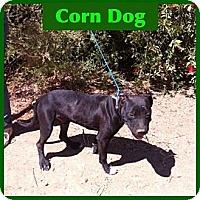Adopt A Pet :: Corn Dog - Orange Cove, CA
