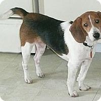 Adopt A Pet :: Hermie - Palm Bay, FL