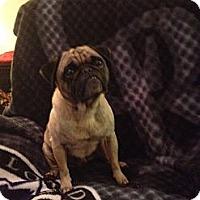 Adopt A Pet :: CHRIS - Mission Viejo, CA
