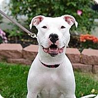 Adopt A Pet :: Maya - Hilliard, OH