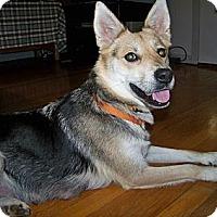 Adopt A Pet :: Maya - Staunton, VA