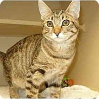 Adopt A Pet :: Charlene - Mesa, AZ