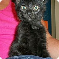 Adopt A Pet :: Ranger - Reston, VA