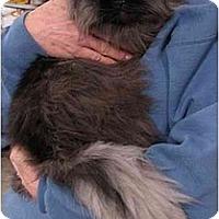 Adopt A Pet :: Isyllt - Davis, CA