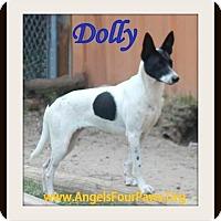 Adopt A Pet :: Dolly - Humble, TX