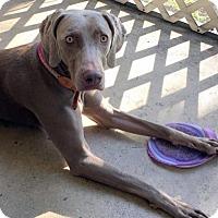 Adopt A Pet :: Arya - Fort Lauderdale, FL