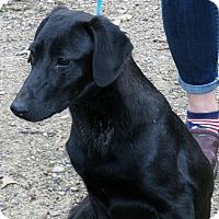 Adopt A Pet :: Lance - Pewaukee, WI