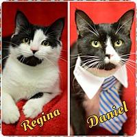 Adopt A Pet :: Regina160445 - Atlanta, GA