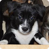 Adopt A Pet :: Trevor - Memphis, TN