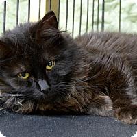 Adopt A Pet :: Lena - Marlinton, WV